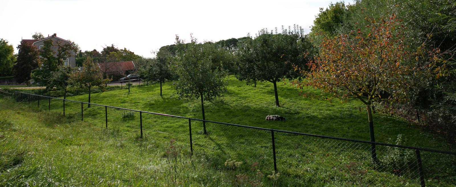 Het groene perceel van Peter de Vries in Rossum.