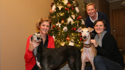 Kerstmarkt om windhonden uit verschrikking te redden