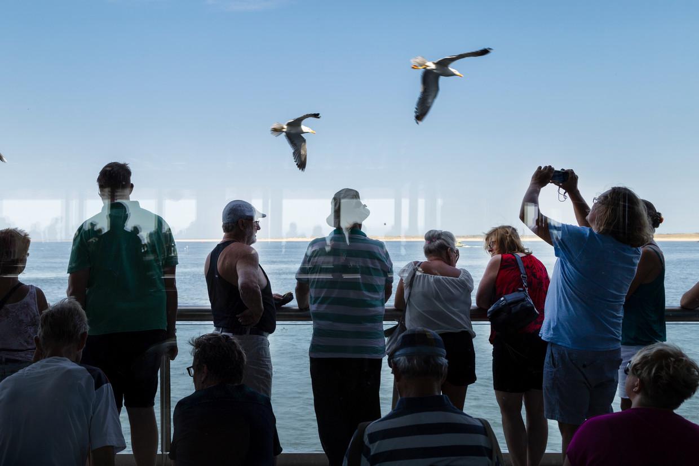Toeristen op de boot voeren de meeuwen.