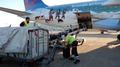 Swissport verwacht tegen eind dit jaar 40 procent van activiteiten uit te kunnen voeren: voorlopig nog geen ontslagen