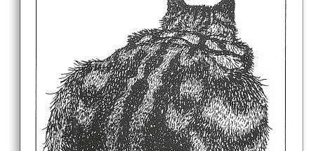 Kunstenares blaast Poezenkwartet nieuw leven in: 'Mag ik van jou de stoeipoes?'