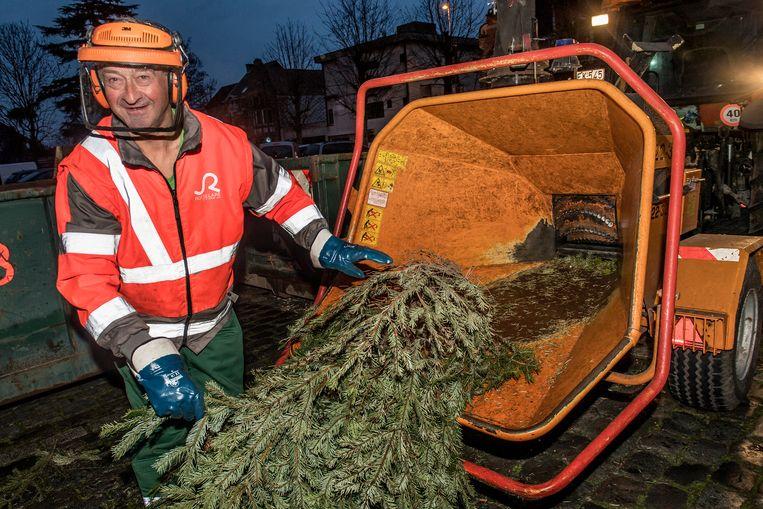 De achtste kerstboomverhakseling in Krottegem