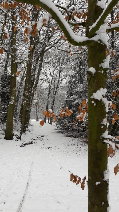 Elly Kersten maakte deze foto zaterdagmiddag in park Brakkenstein in Nijmegen.