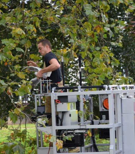 Brandweer redt meeuw uit boom in Arnhem