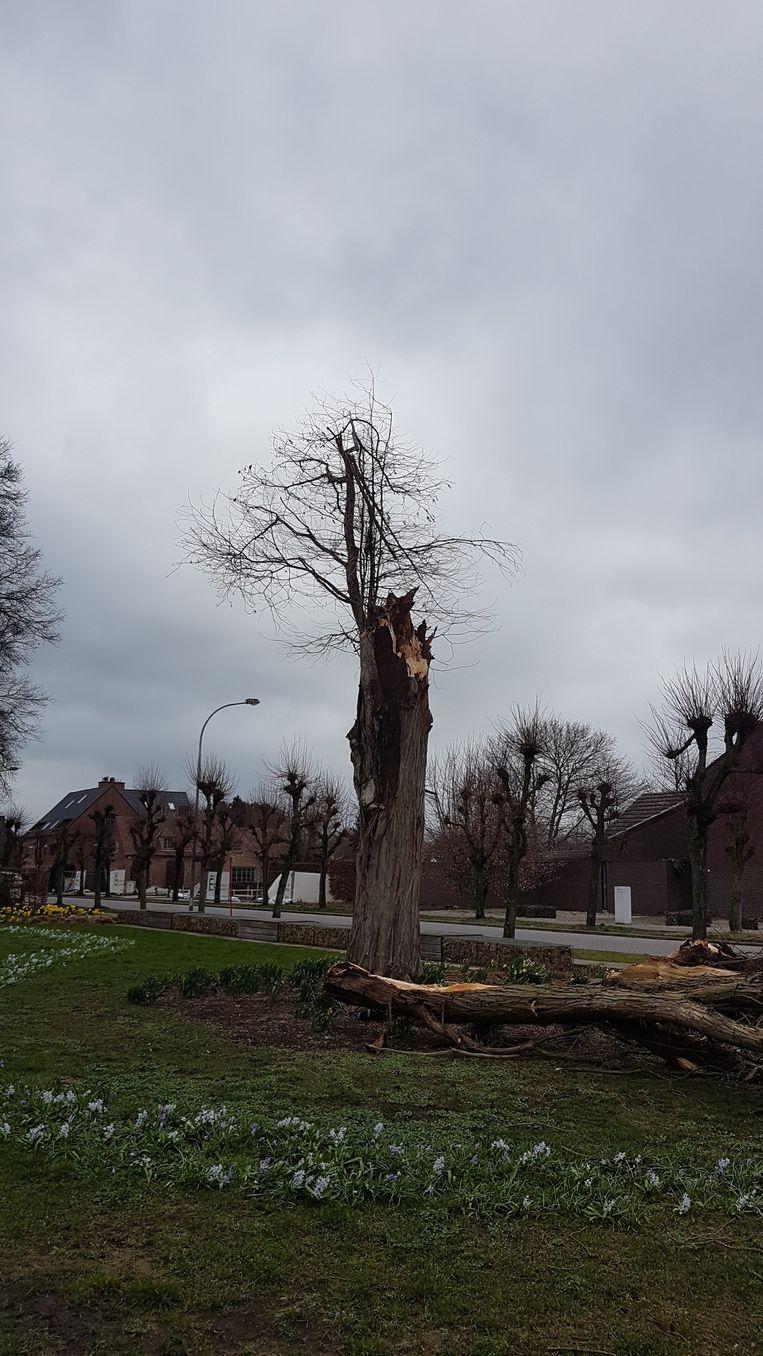 De boom in het parkje aan de Gravin Elisabaethlaan sneuvelde ook.