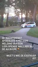 Politie Epe, Heerde en Hattem deelde de ontspanning van de wallaby in een story op Instagram.
