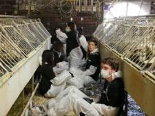 Eigenaar foie gras-boerderij: 183 eenden van schrik gestorven na inval activisten