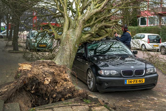 Een boom is boven op een auto gevallen tijdens de storm Ciara. Foto ter illustratie, het gaat hier niet om een ongeval in Hilversum.