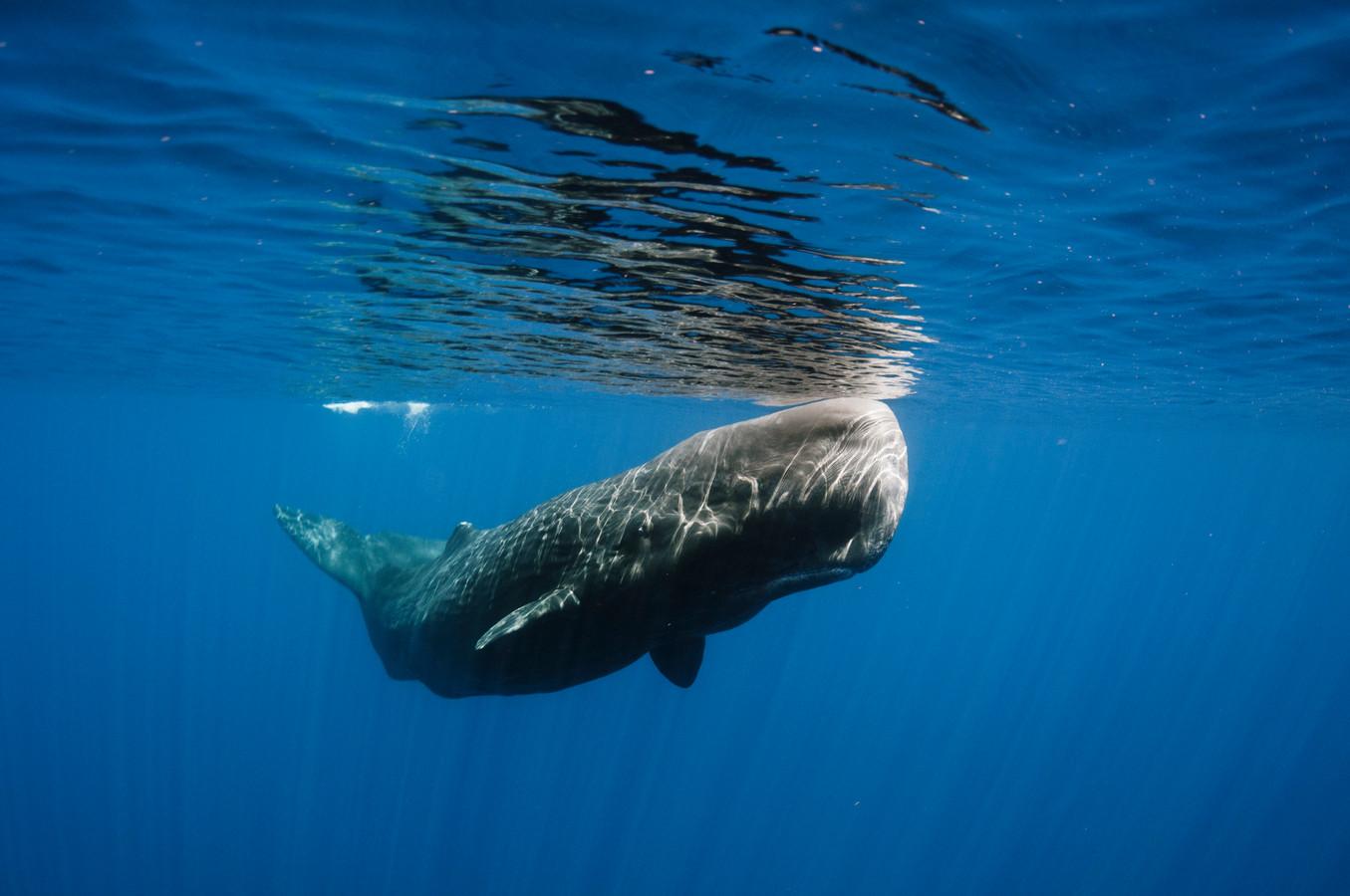 Moby Dick | Foto | pzc.nl