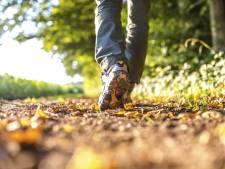 Tholen heeft nu een wandelnetwerk van 239 kilometer lang