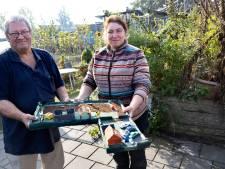 Op Suytkade wordt het leger, in Brouwhuis groener: Helmondse Stadstuin zet zaterdag voor het eerst de deur open aan de Meanderlaan