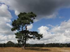 Utrechts Landschap wil nieuwe natuurgebieden en vraagt inwoners om financiële bijdrage