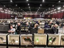 Vogelbeurs verdwijnt door sluiting IJsselhallen uit Zwolle, Pasar Malam houdt opties open