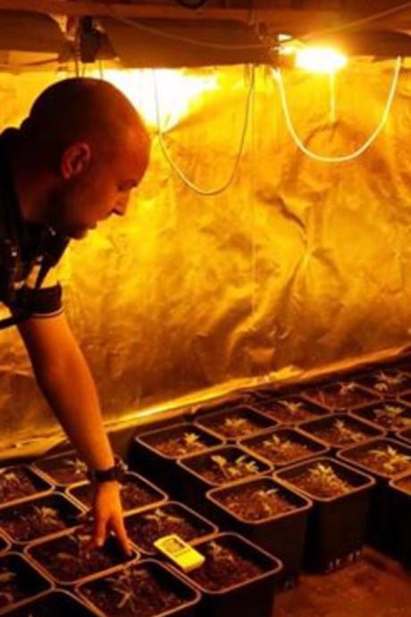 Kwekerij met bijna honderd hennepplanten geruimd in Gemert