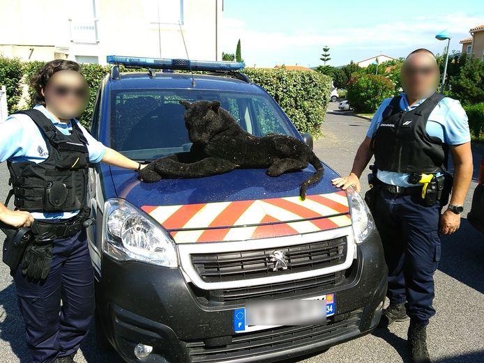 Un animal qui s'est montré plutôt conciliant et des gendarmes qui ont fait preuve d'une certaine maîtrise...