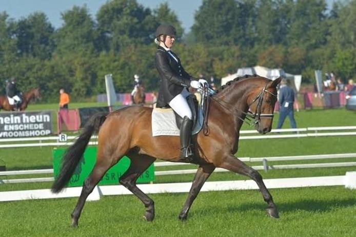 Deelnemer aan een vorige editie van de Diamant van Twenterand dressuur in actie, waarbij het paard een uitgestrekte draf laat zien.