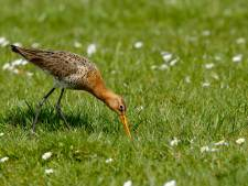 Spot weidevogels met fietstocht door Midden-Delfland