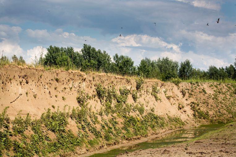 De zandberg vol gaten waar honderden oeverzwaluwen broeden. Beeld Arie Kievit