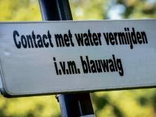 Blauwalg in vijver bij jongerencentrum in Leusden