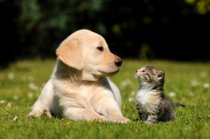 La nouvelle législation exige l'enregistrement en ligne dans une base de données centrale et commune aux 3 Régions, qui était actuellement réservée aux chiens seuls.