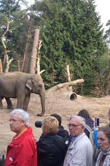 En het pasgeboren olifantje heet... Yunha!