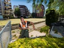 Opruimen van groene drab Hofvijver gaat dagen duren: 'Lijkt wel een voetbalveld!'