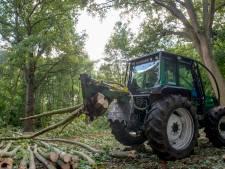 Commissie behandelt bezwaar half jaar na bomenkap