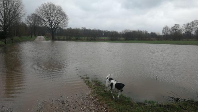 Wateroverlast in Hengelo, de hond Ringo krijgt natte pootjes.