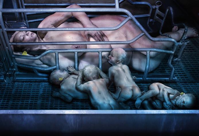 Moederdagactie van Varkens In Nood
