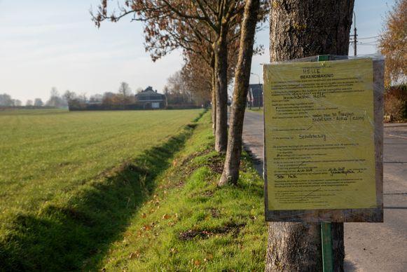 De gemeente Melle wil de bomen rooien.