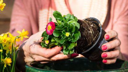 Daar is de lente, daar roept de tuin: wat mag je al doen en waar moet je zeker afblijven