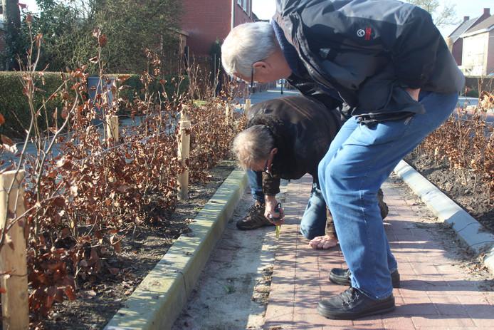 Piet Brosens (zittend) en Nico Geers van de Fietsersbond nemen een nader kijkje in de Sint Jansstraat. Niet alleen op de plek van het ongeluk van Saskia Hontelé zijn ze ontevreden over de situatie. ,,Toen ik het uitprobeerde viel ik zelf ook al bijna door dat gootje.''