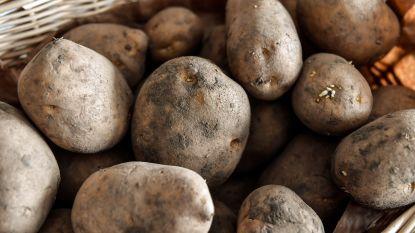 """Dieven stelen 300 kilo aardappelen van veld: """"We gaan extra patrouilleren, maar 'moeskoppen' staat niet in GAS-regelement"""""""