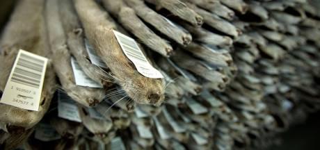 Pelsdierteller uit Gemert: Fiod-inval is 'woest aangezet'