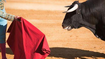 Stier doorboort matador driemaal, toch wil hij absoluut direct weer de ring in