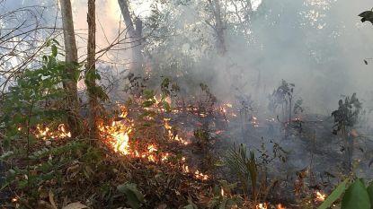 Alweer honderden nieuwe bosbranden in Amazonewoud