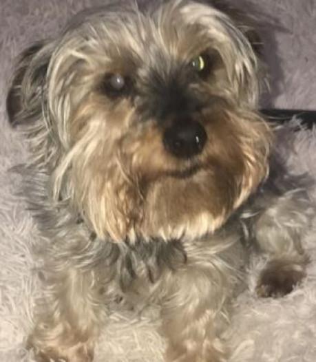 Ontslagen Schotse (18) begint petitie voor rouwverlof bij overlijden huisdier