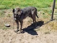 Dierenambulance doet aangifte: hond in brandende zon aan paaltje achtergelaten in Alverna