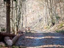 Le Bois du Prince à Loverval sera interdit au public