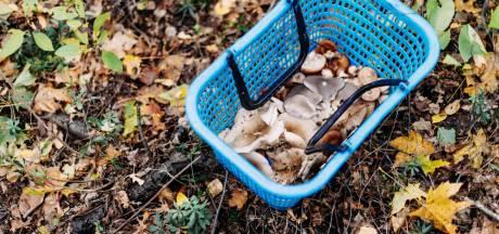 Paddenstoelen plukken in het bos: 'Blijf er vanaf'
