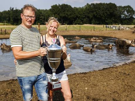De varkens van Koen en Melissa blazen bubbels in de 'mooiste modderpoel van 2020'