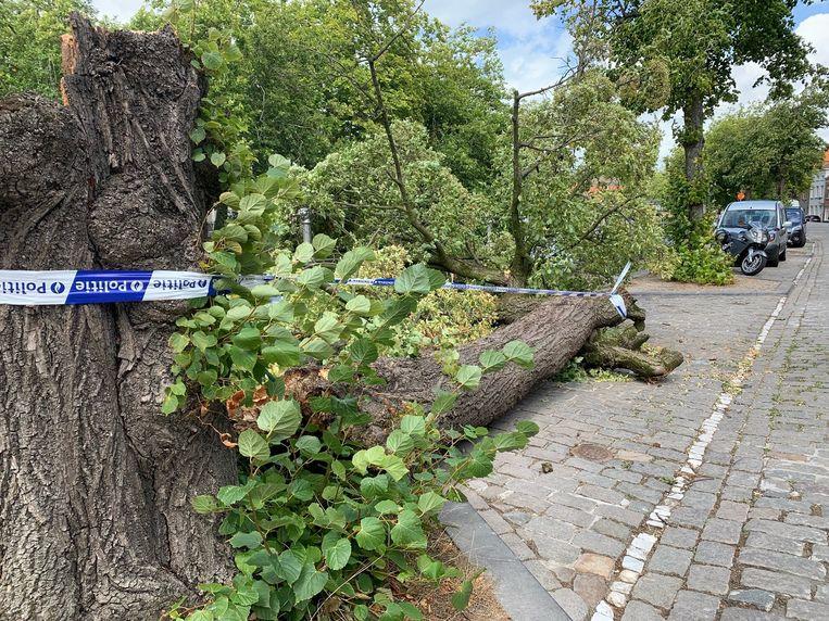 Langs de Potterierei viel een boom op een geparkeerde wagen.