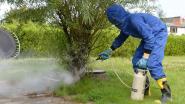 Wespenverdelging nodig? Vul dan online formulier van de brandweer in