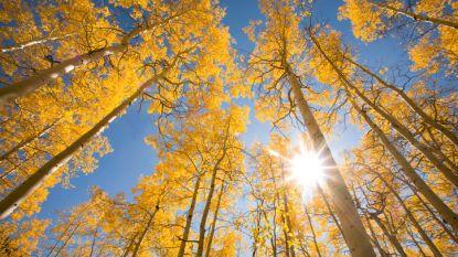 Vandaag nog zacht en zonnig, maar herfstweer is in zicht