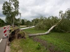 Storm rukt meer dan vijftig grote bomen uit de Brummense grond