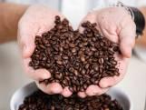 Met welke bonen maak je de lekkerste koffie? Koffiekenner keurt 14 soorten uit de supermarkt