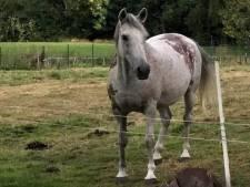 Dierenbeul slaat paard met hamer dood in België
