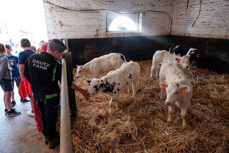 Op Binnen bij Boerendag in Tongeren maken kinderen kennis met de dagelijkse werking op een boerderij zodat ze weten waar het vlees vandaag komt die ze thuis op hun bord krijgen.