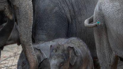 Babyolifantjes snuiven voor het eerst frisse lucht op