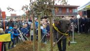 Bekkevoort plant Vredesboom tijdens herdenking Wapenstilstand